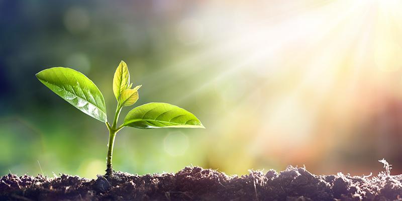 TÜV AUSTRIA Romania – akkreditierte Stelle für Bio-Zertifizierung